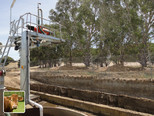 Livestock plants for 500 cows - Australia